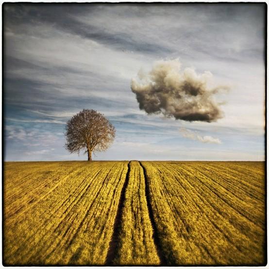 cloud_tree